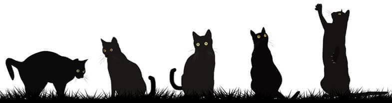Kattskyltar Farbror Skylt
